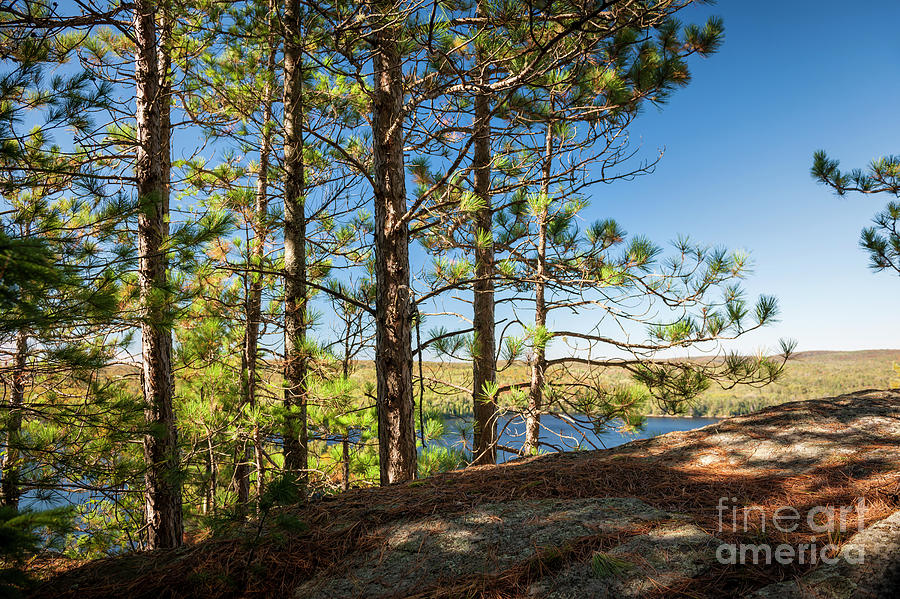 Pine Photograph - Pines On Sunny Cliff by Elena Elisseeva
