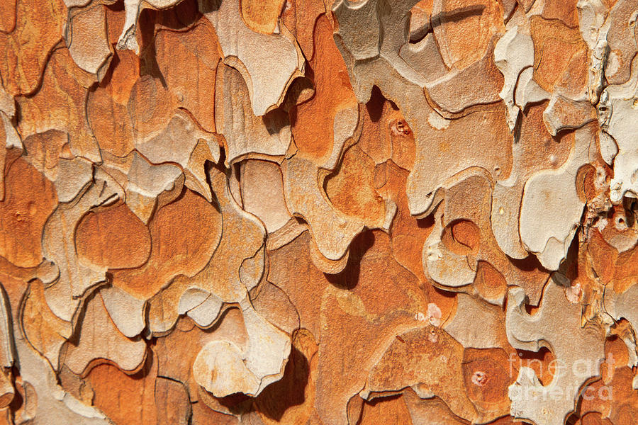 Abstract Photograph - Pining For A Jig-saw Puzzle by Marilyn Cornwell