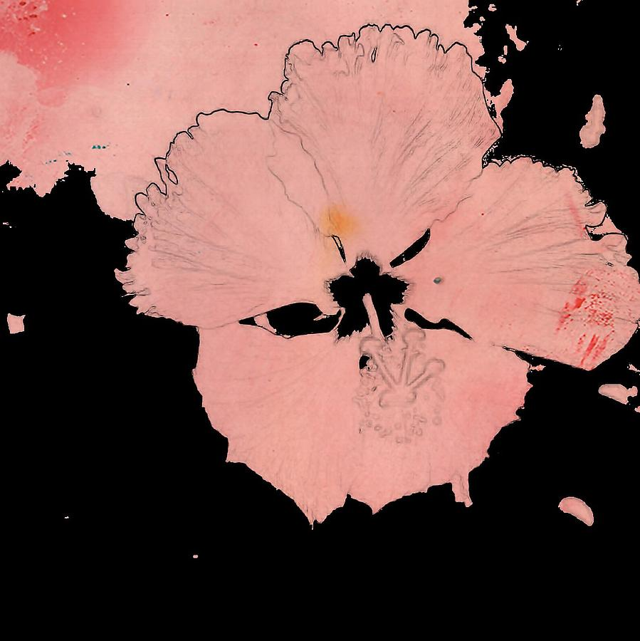 Pink And Black Hibiscus Photograph By Mark J Dunn