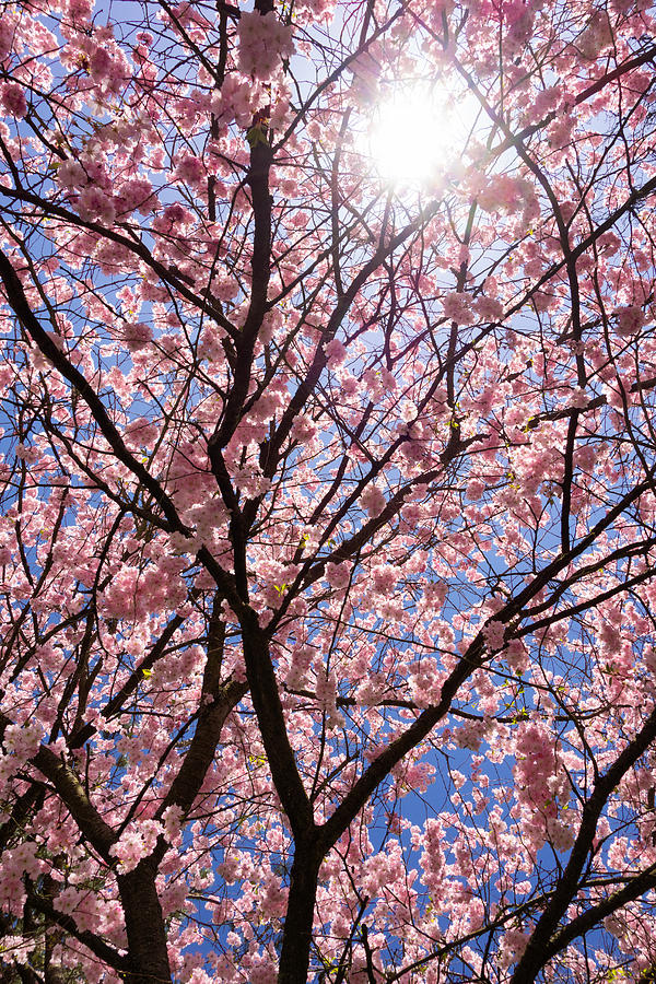 Pink And Blue Spring Colors Photograph