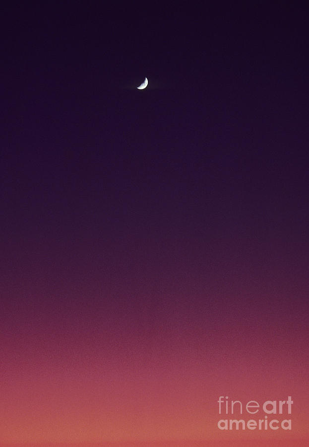 Above Photograph - Pink And Purple Sunset by Carl Shaneff - Printscapes