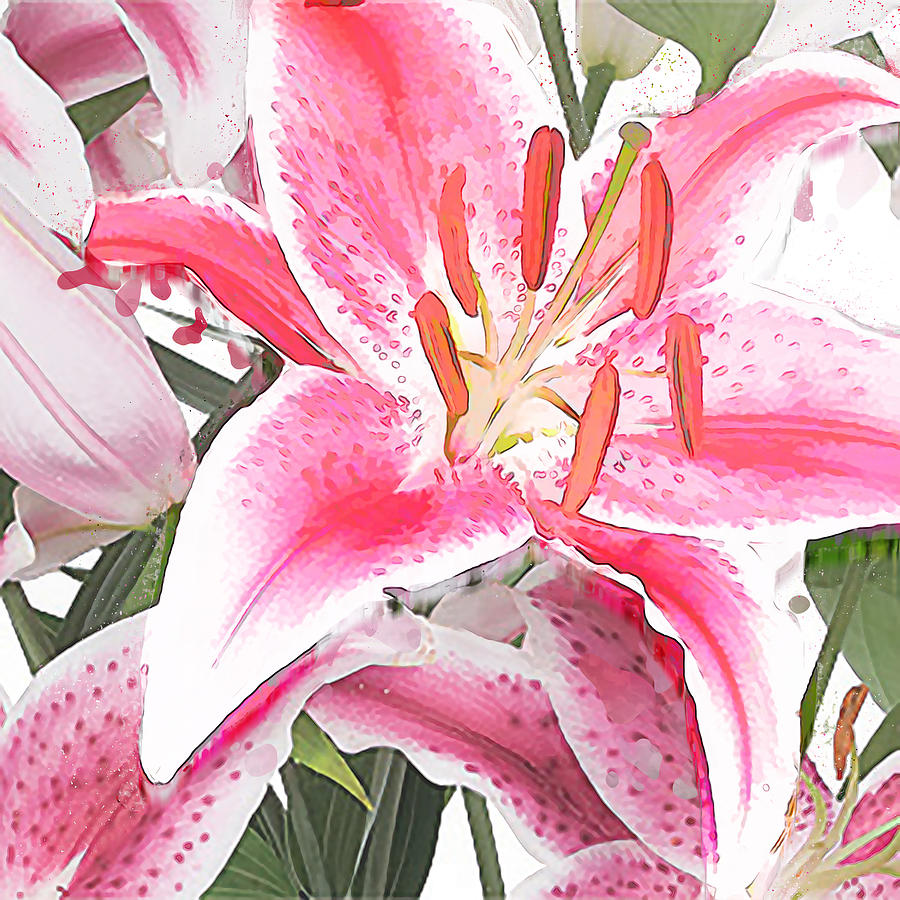 Pink And White Lily Smooth Pastel Water Color Painting By Elaine Plesser