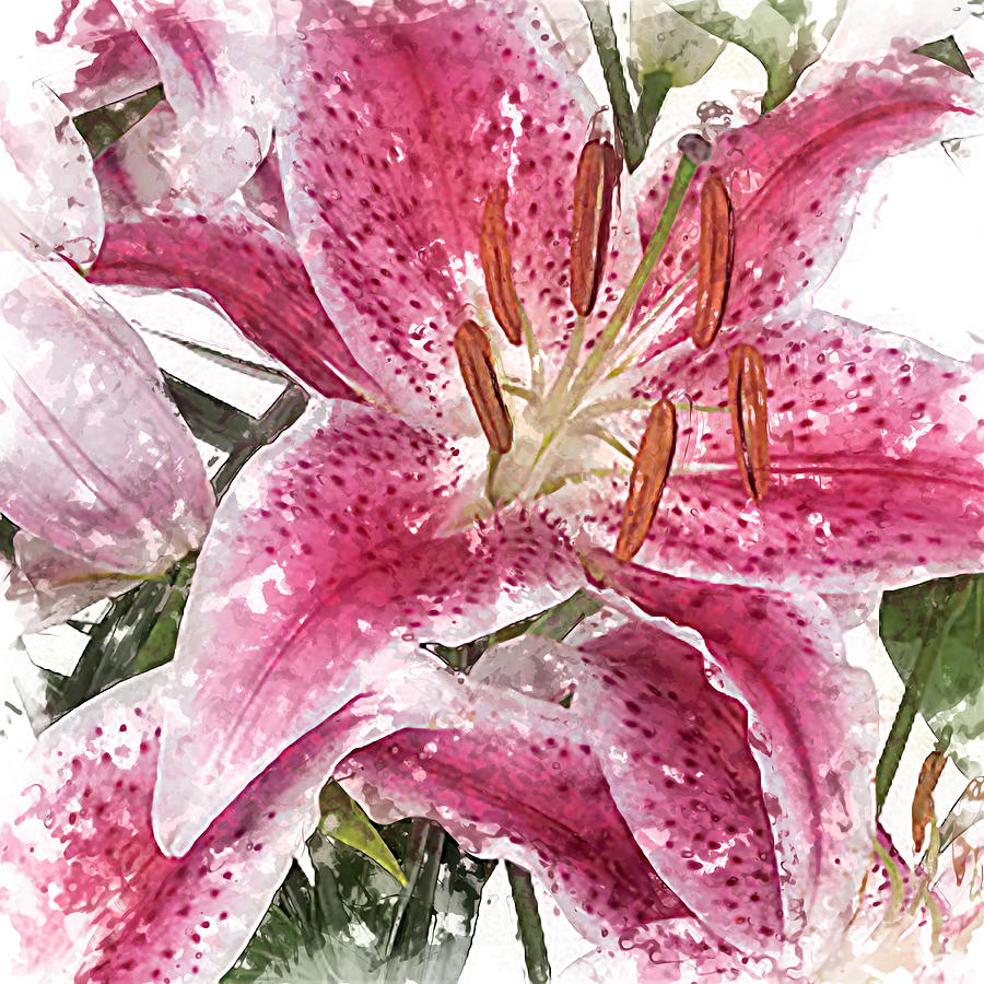Pink And White Lily Textured Water Color Painting Painting By Elaine