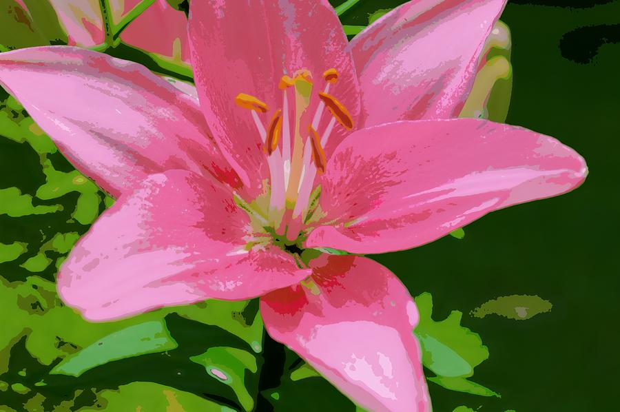 Asiatic Lily Photograph - Pink Asiatic Lily by Marla McPherson