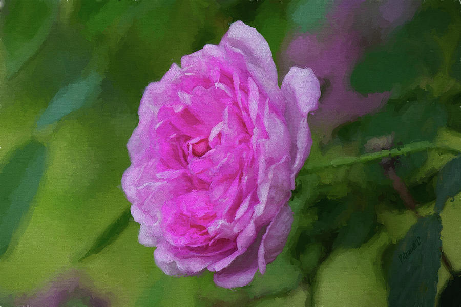 Pink Beauty in Bloom by Patricia Montgomery