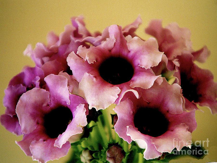 Pink Bell Flowers Photograph By Merton Allen