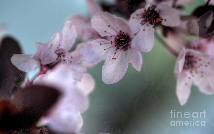 Pink Photograph - Pink Blossoms by Jim And Emily Bush