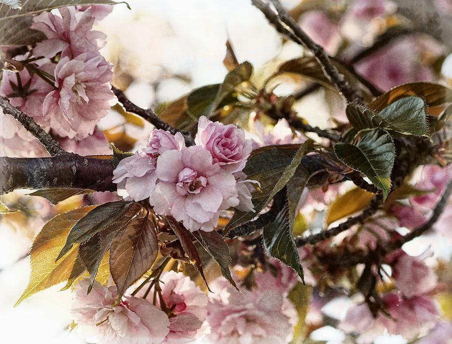 Field Photograph - Pink Blossoms by Scott Fracasso