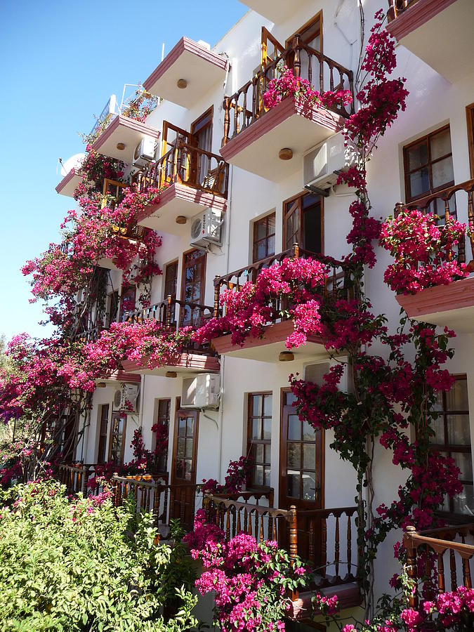 pink bougainvillea balcony flowers photograph by richard griffin