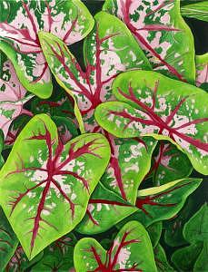 Pink Painting - Pink Caladiums I by Patti Gettinger