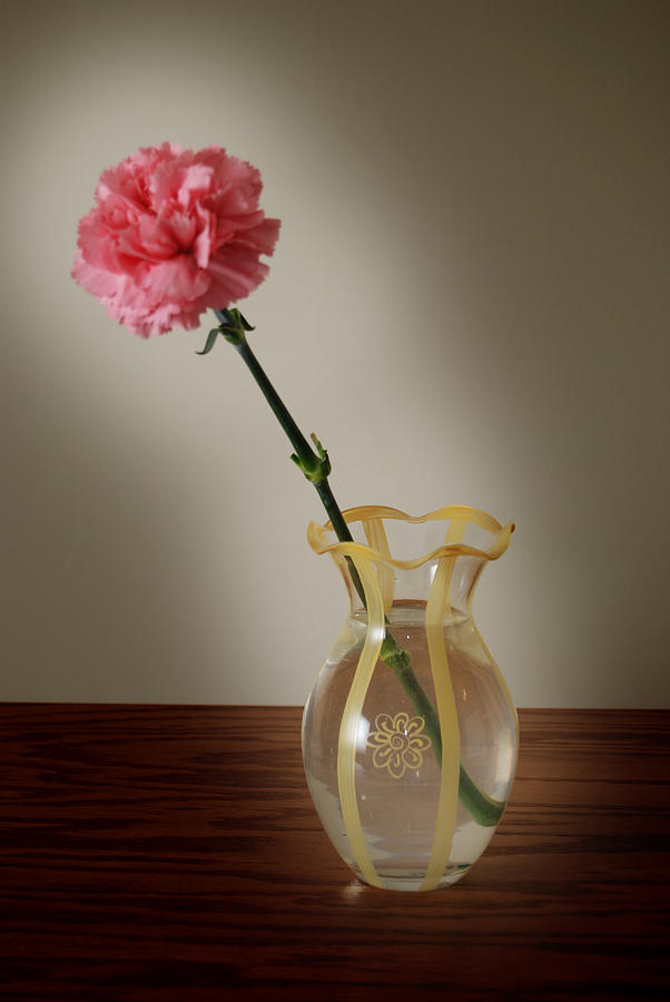 Flower Photograph - Pink Carnation by Dave Chafin