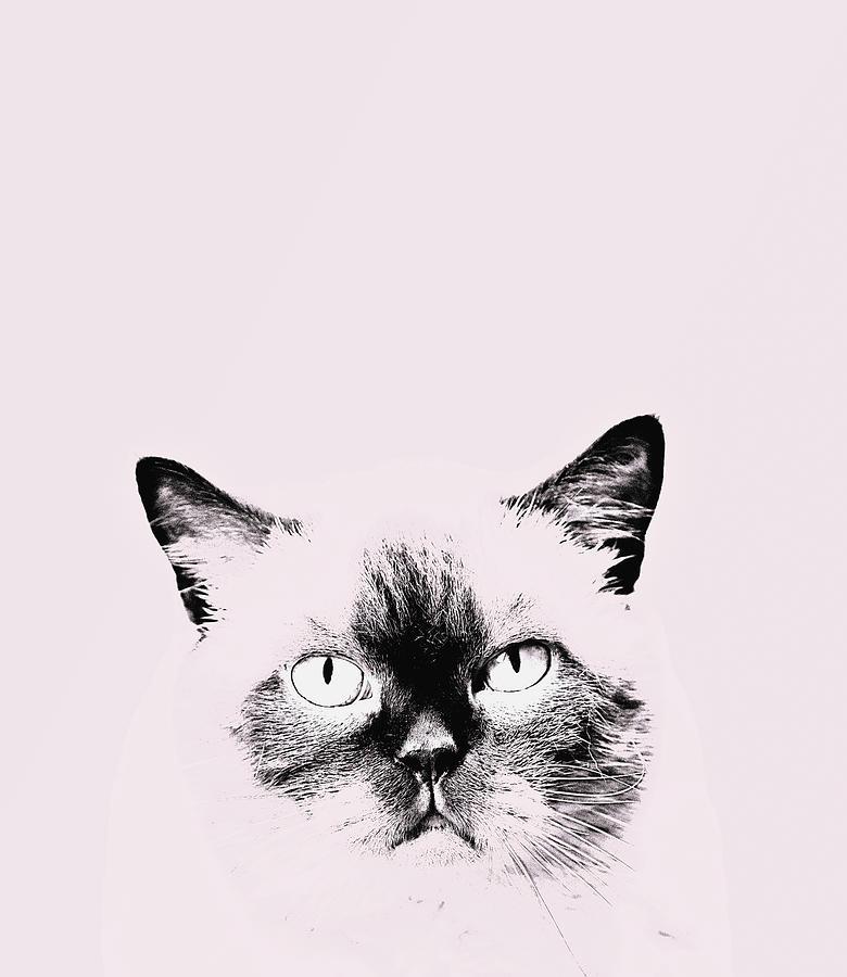 Pink Cat Digital Art