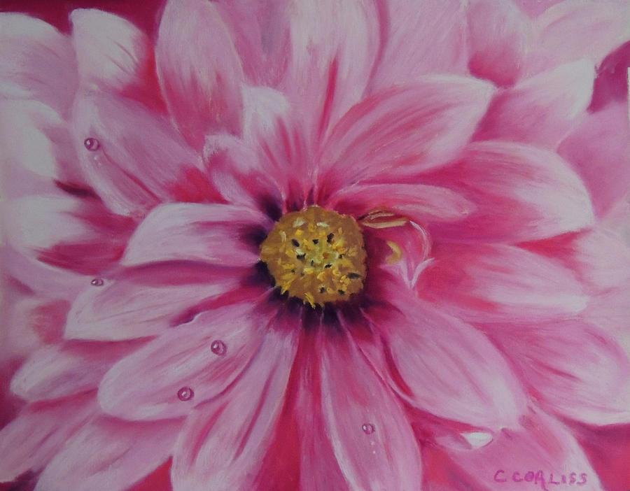 Pink Dahlia I by Carol Corliss