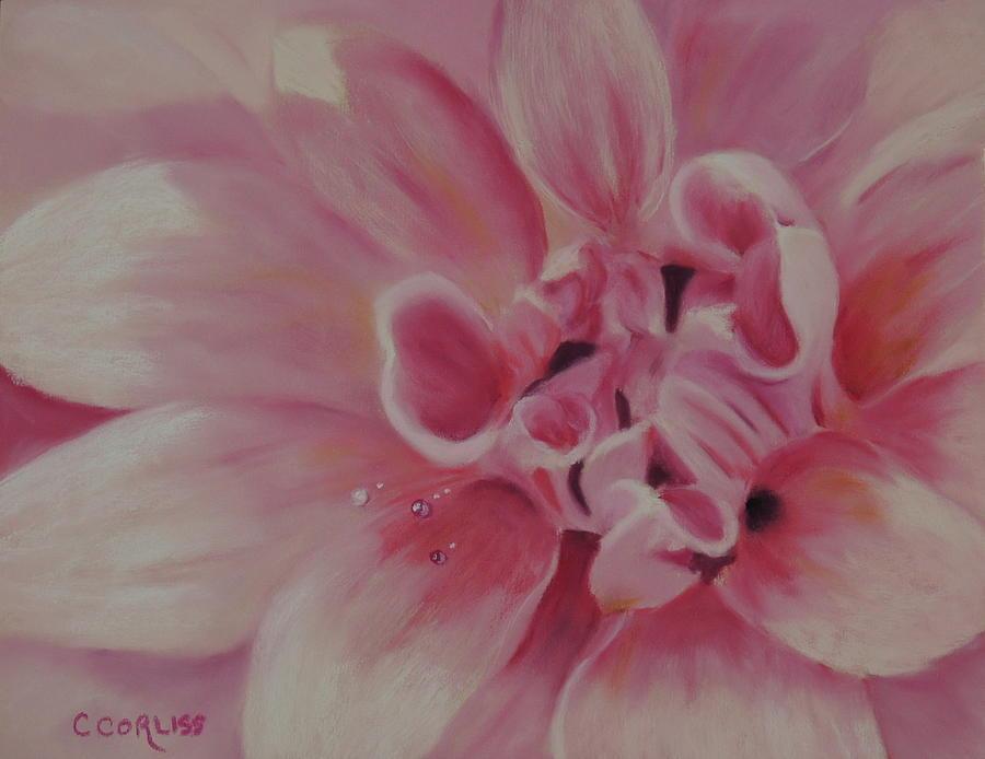 Pink Dahlia II by Carol Corliss