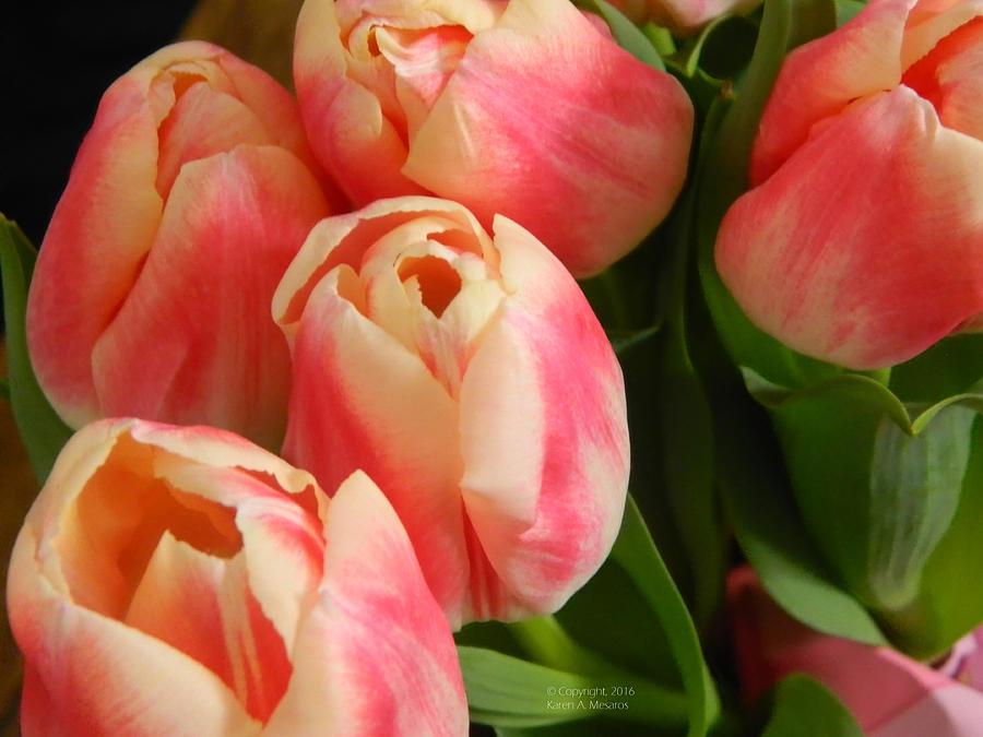 Pink Delight by Karen Mesaros
