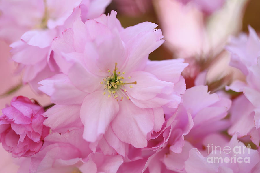 Pink Delight Photograph