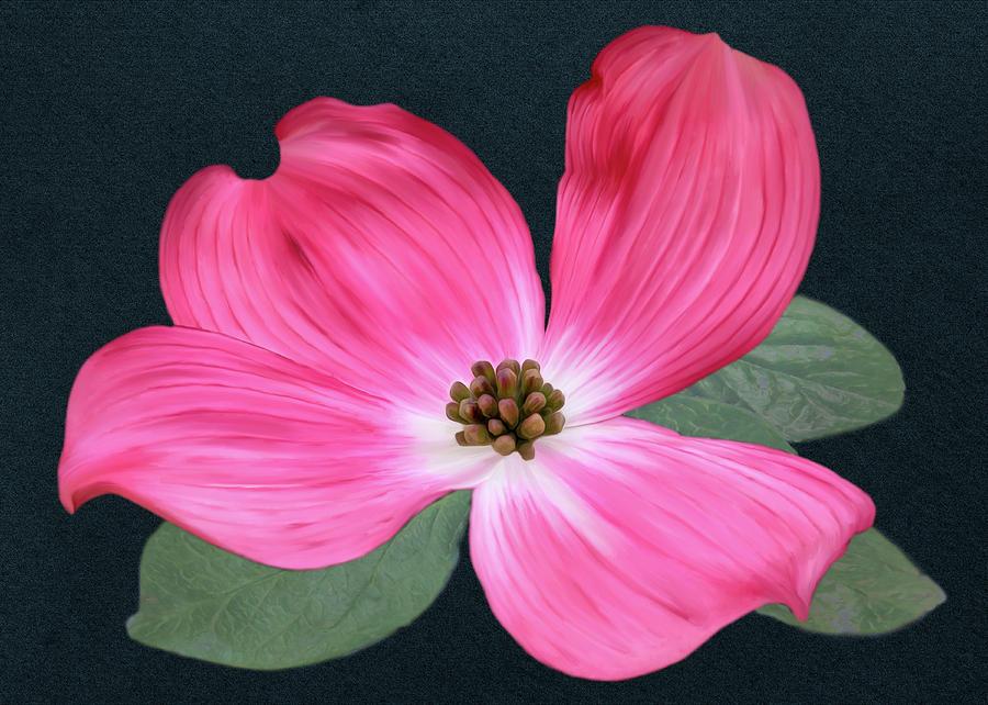 Pink Dogwood Blossom #1 by Bill Johnson