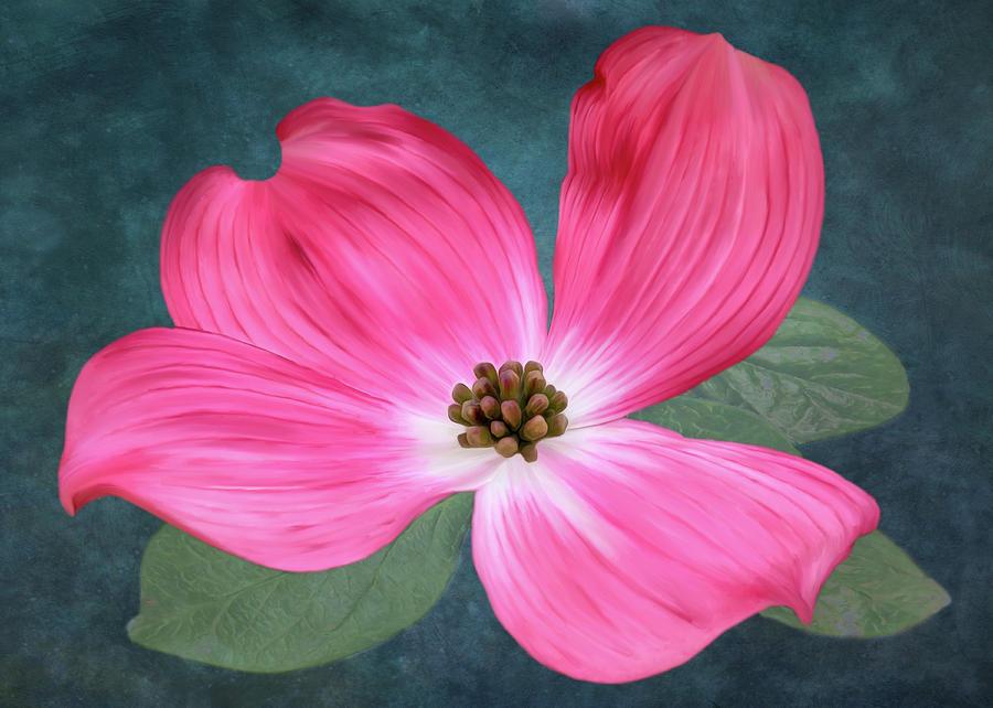 Pink Dogwood Blossom #2 by Bill Johnson
