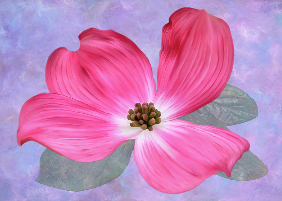 Pink Dogwood Blossom #3 by Bill Johnson