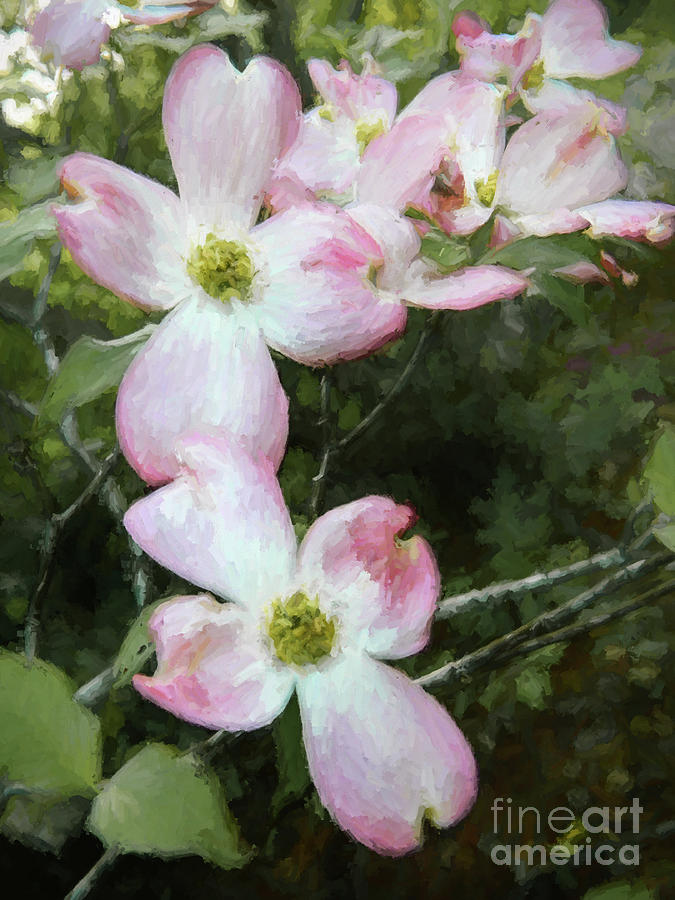 Pink Dogwood - Bring On Spring Series Photograph
