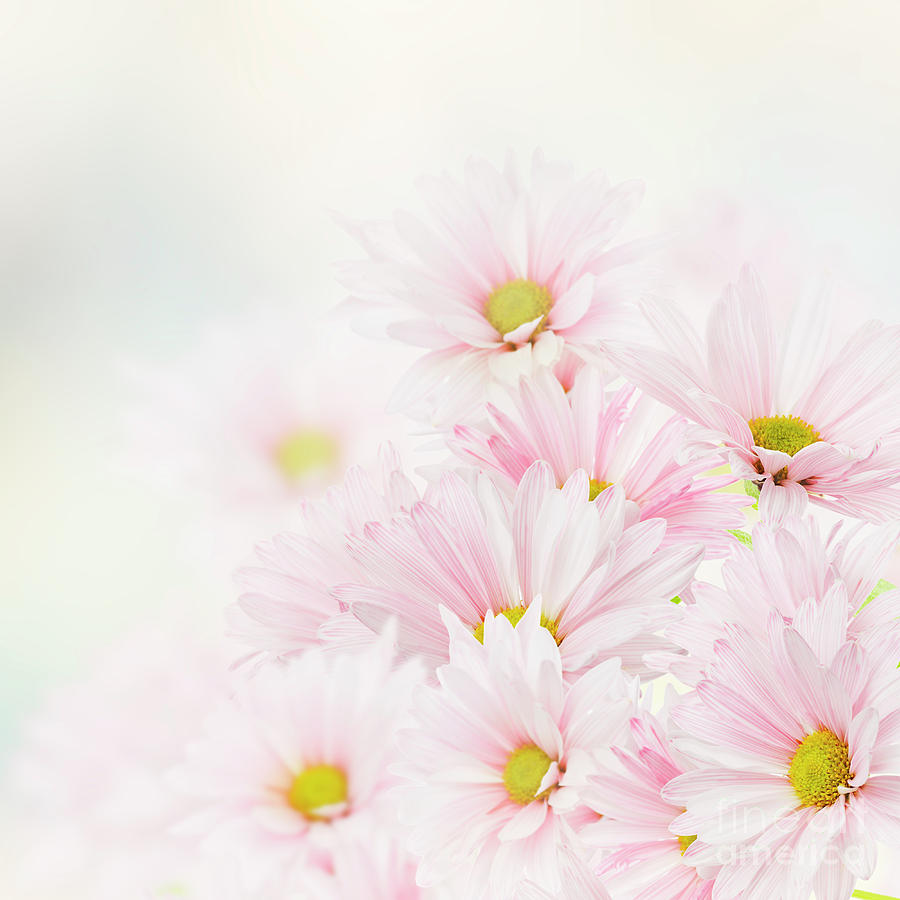 Pink Floral Background Photograph By Svetlana Foote