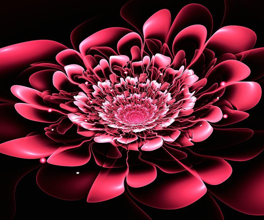 Flower Digital Art - Pink Flower by Anastasiya Malakhova