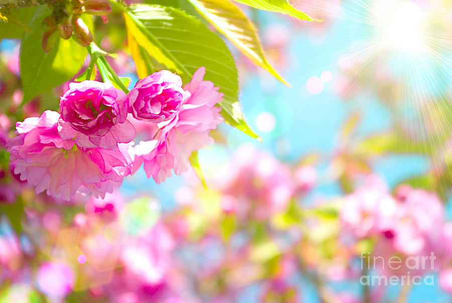 Pink Flower Photograph - Pink  Flower Beautiful by Boon Mee