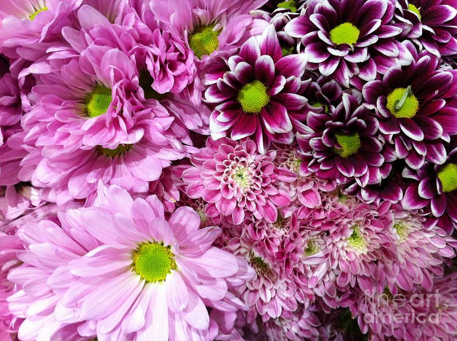 Nature Photograph - Pink Flower Carpet by Flo DiBona