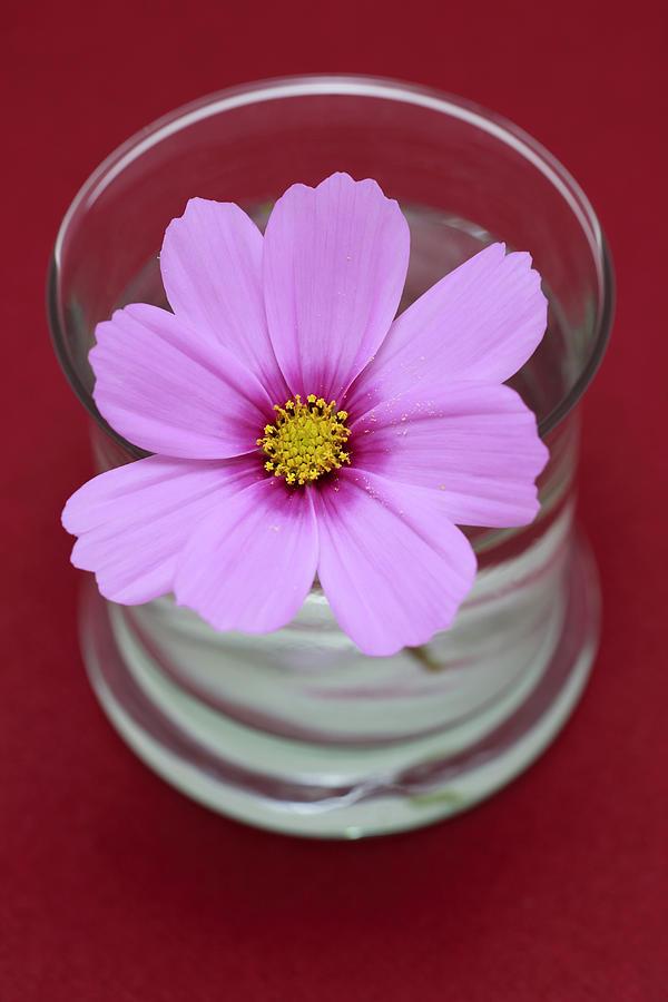 Pink Photograph - Pink Flower by Frank Tschakert