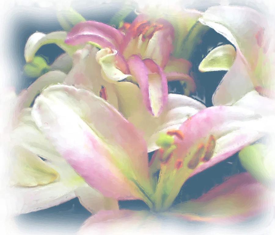Pink Flower Photograph - Pink Flower by Ralph Liebstein
