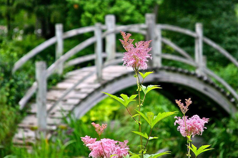 Bridge Photograph - Pink Flower by Robert Joseph
