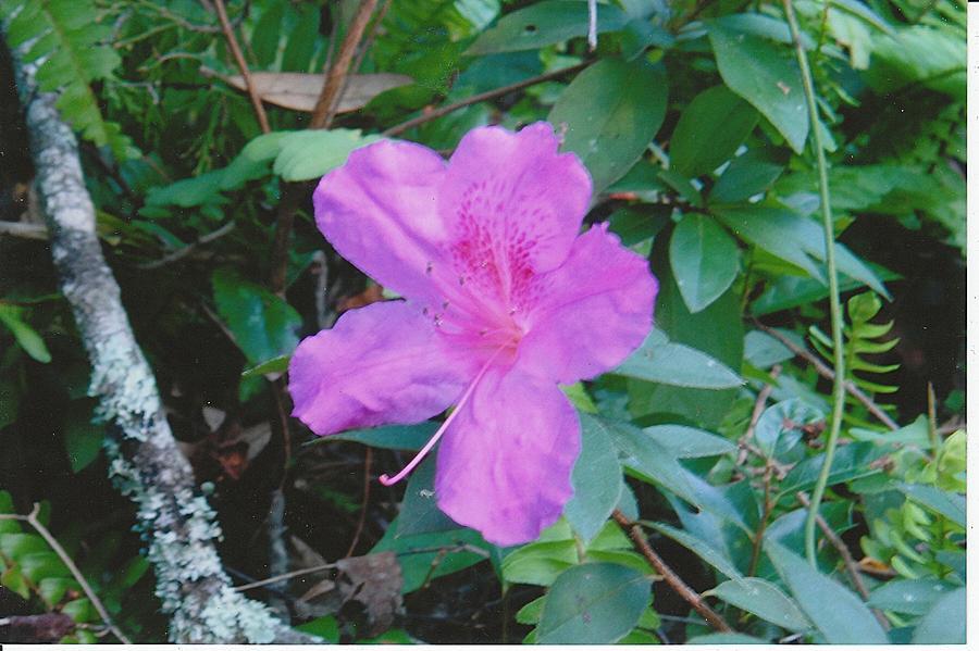 Photograph Photograph - Pink Flower by Tara Kearce
