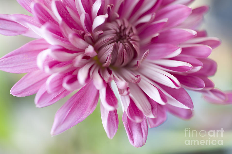 Pink Flower Photograph - Pink Flower1 by Dewey Register