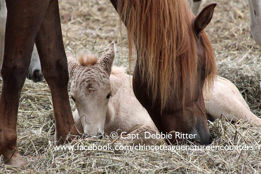 Foal Photograph - Pink Foal by Captain Debbie Ritter
