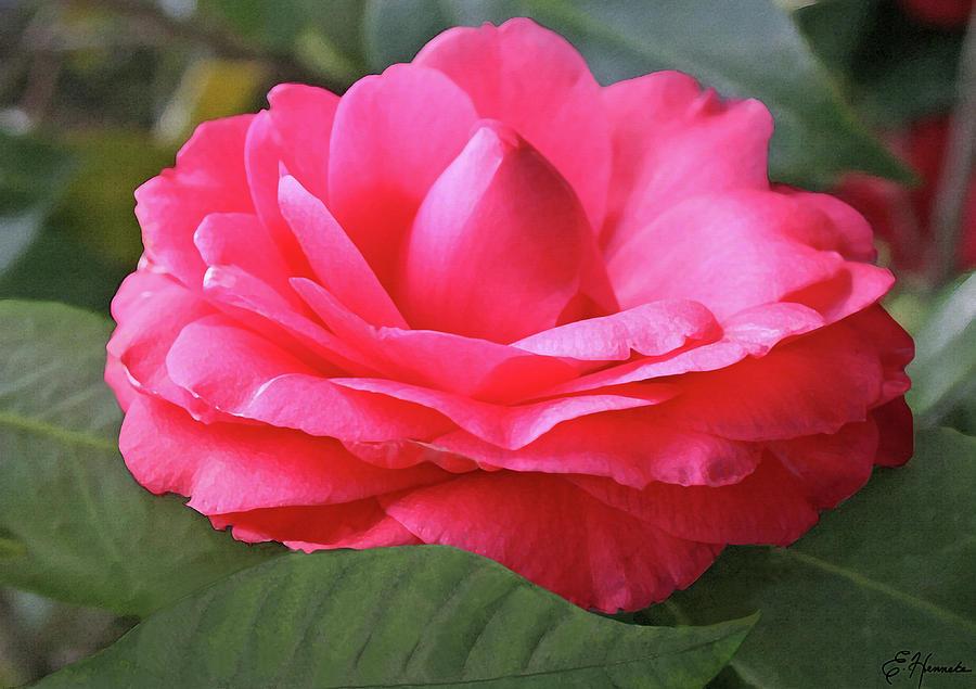 Pink Gardenia by Ellen Henneke