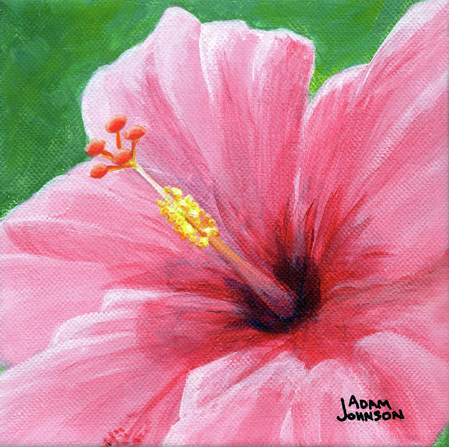 Pink Hibiscus by Adam Johnson