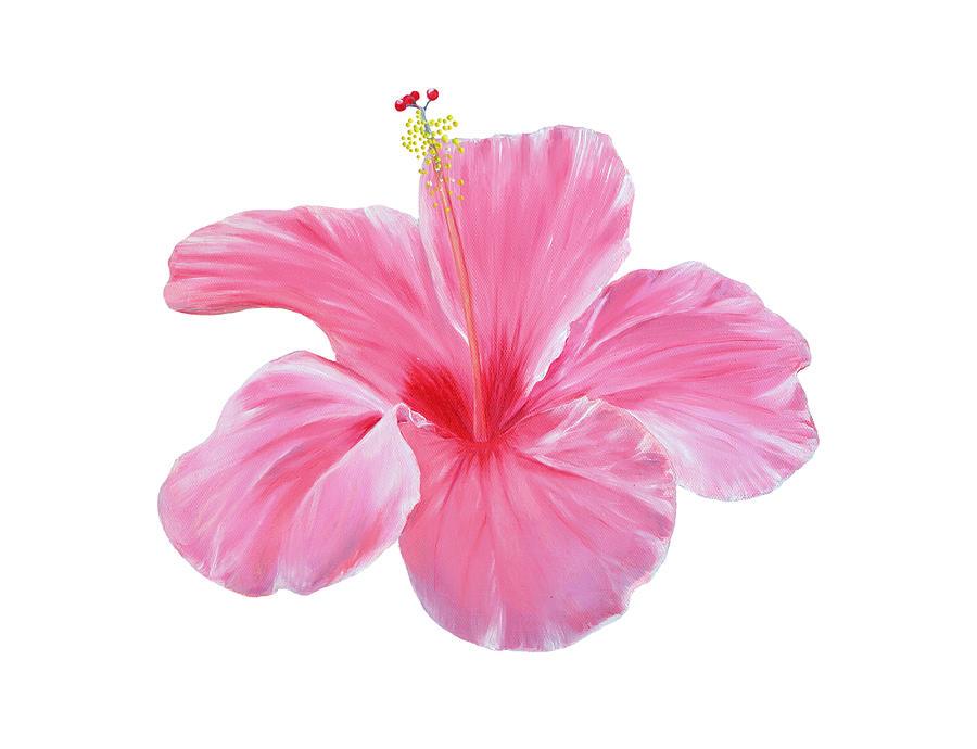 Pink Hibiscus by Elizabeth Lock