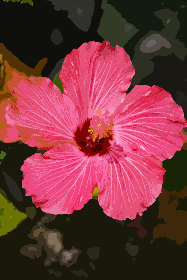 Flower Photograph - Pink Hibiscus by Kimberly Camacho