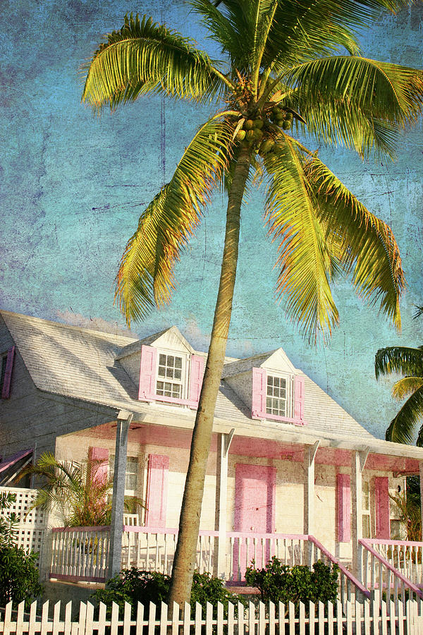 Pink House Palm Photograph by Guy Crittenden