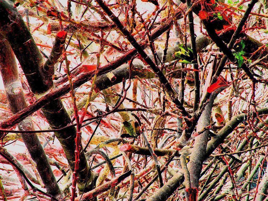 Digital Prints Photograph - Pink Jungle by Teo Santa