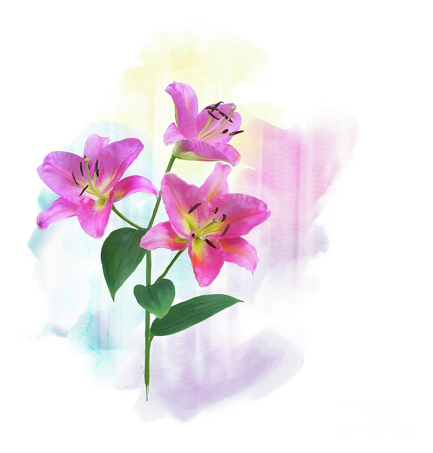 Pink Lily Flowers Watercolor Digital Art By Svetlana Foote
