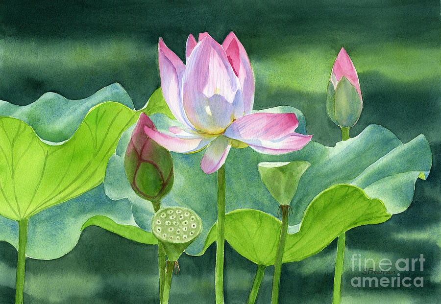 Pink lotus blossom buds and seed pods painting by sharon freeman pink painting pink lotus blossom buds and seed pods by sharon freeman mightylinksfo