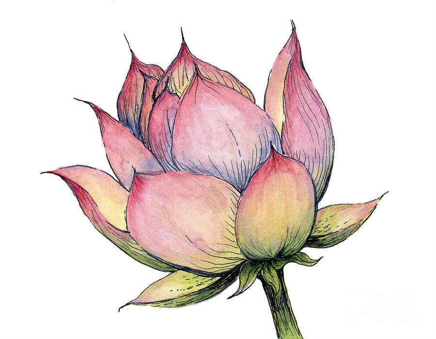Pink Lotus Painting - Pink Lotus by Elizabeth Oertel