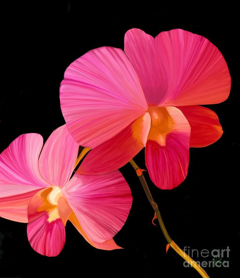 Pink Lux by Rand Herron