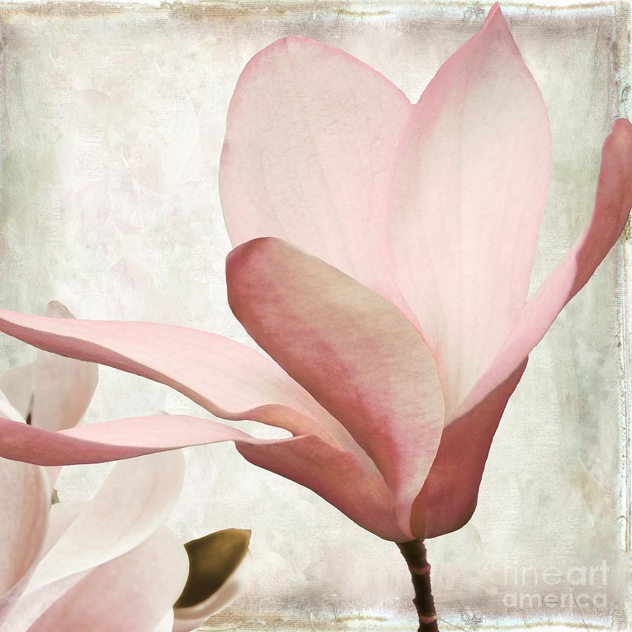 Pink Magnolia Sunwashed Painting