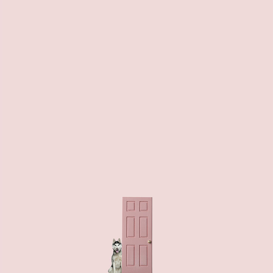 Minimal Photograph - Pink On The Pink by Caterina Theoharidou