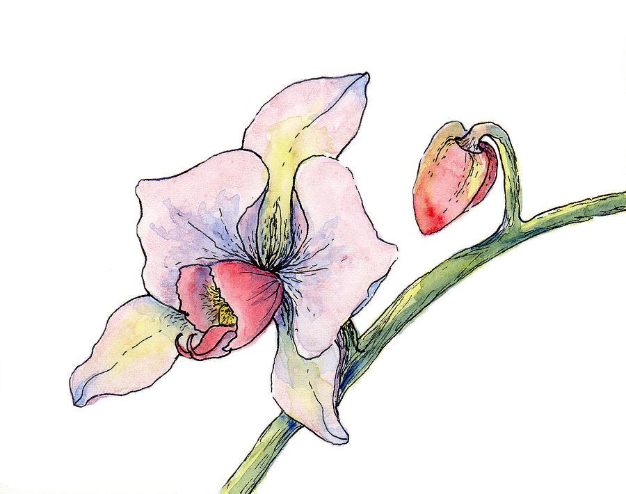 Botanical Painting - Pink Orchid  by Elizabeth Oertel