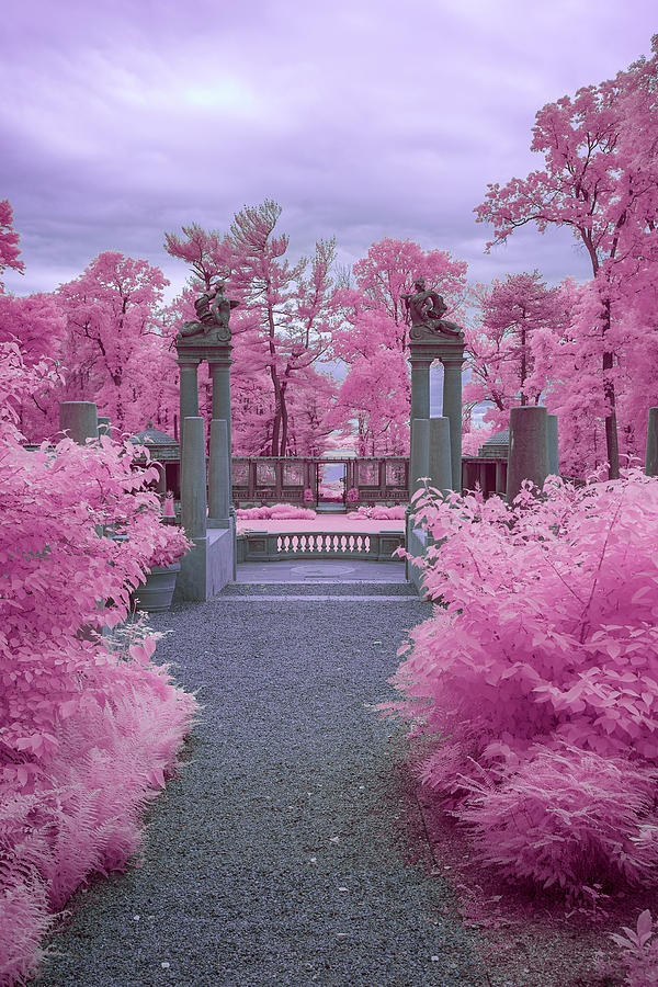 Pink Path To Paradise Photograph by Brian Hale