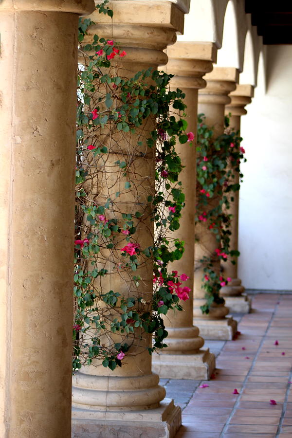 Pink Peacock Photograph - Pink Peacock Colored Bougainvillea Blossoms Climbing Pillars Photograph By Colleen by Colleen Cornelius