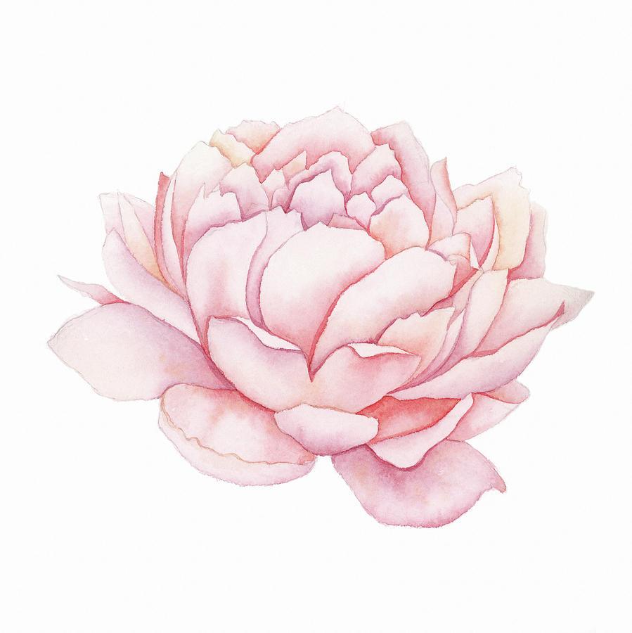 white flower wallpaper for android